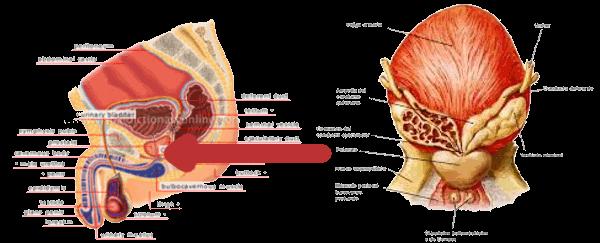 sintomi dopo aver tolto un adenoma alla prostata